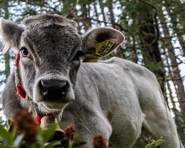 Grande Fineile: Eskalation in den Ötztaler Alpen