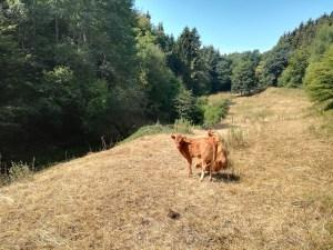 09.08.2018: Wildnis-Trail Etappe