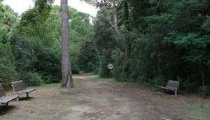 Pinienwald