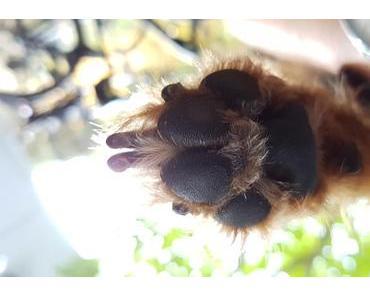 Die Spuren der Liebe für das geliebte Haustier am Schlüsselanhänger