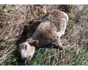 Mehr als 100 tote Tiere geborgen
