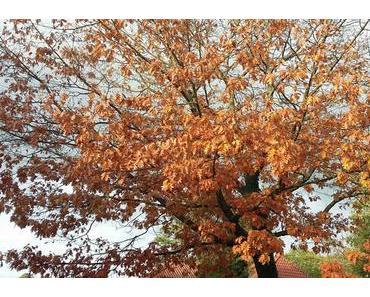 Herbst, Rohkost und inneres Gleichgewicht