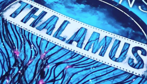 Thalamus