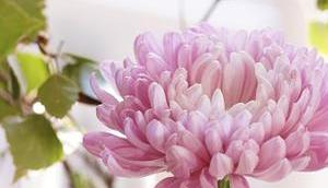 Friday-Flowerday 42/18