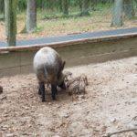 Edersee noch Wildtierpark