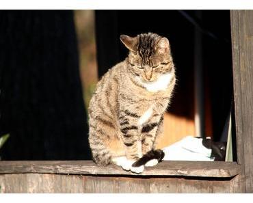 Foto: Katze beim Power Napping in der Herbstsonne