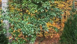Garten gestalten mein Neuer: Rhododendron