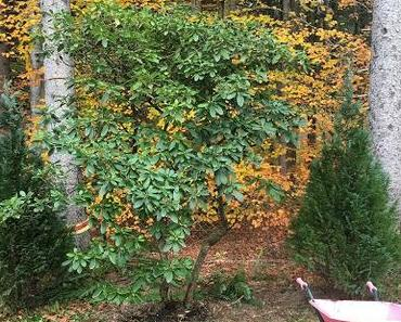 Garten gestalten - mein Neuer: Rhododendron