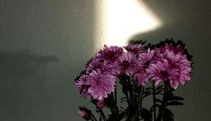 Foto: Schattenspiel Wand