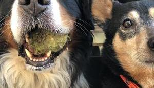 Hundenomaden einem Rudel, auszieht, Europa erkunden