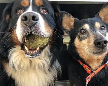 Die Hundenomaden – von einem Rudel, das auszieht, Europa zu erkunden