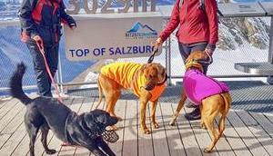 Hund Kitzsteinhorn