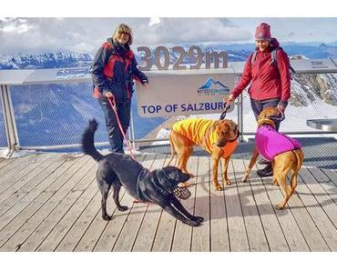 Mit Hund auf das Kitzsteinhorn