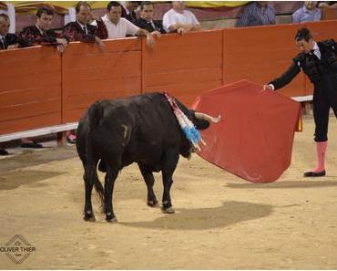 Toreros dürfen in der Arena wieder Stiere töten