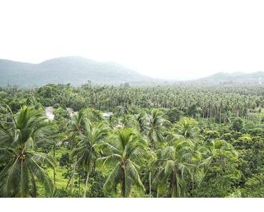 7 Tipps für euren Urlaub auf Koh Samui