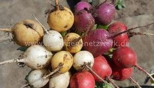 Sieben alte Gemüsesorten Anfänger