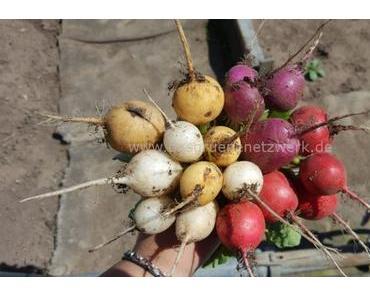 Sieben alte Gemüsesorten für Anfänger