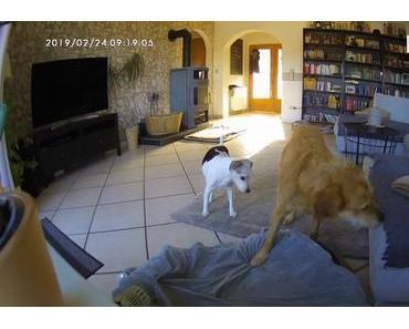 Furbo Hundekamera – Leo und Lucy allein zu Hause (Werbung)