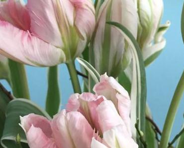 Friday-Flowerday – oder – Große Tulpenliebe