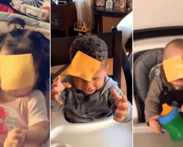 Die Cheese Challenge: Phänomenal dumm