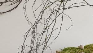 Deko Birke: Naturdeko euer Sideboard Wand.