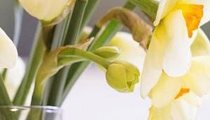 Friday-Flowerday 16/19