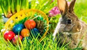 Frohe Ostern 2019 wünscht Mariazellerland Blog