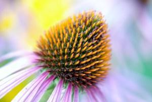 Die besten Heilpflanzen für das Immunsystem