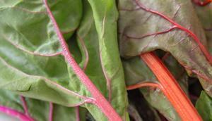 Saisonrezept Juni Mediterrane Mangoldröllchen