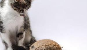 gute Gründe: Darum Kokosöl deine Katze