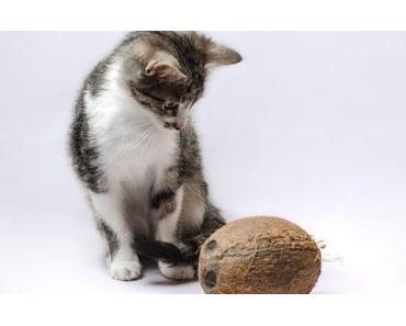 3 gute Gründe: Darum ist Kokosöl für deine Katze gut