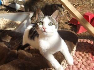 Die Katze aus dem Müll sucht ein schönes Zuhause