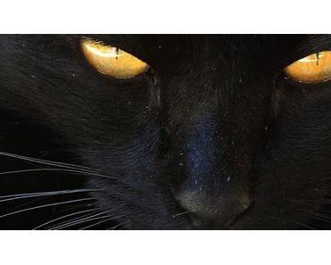 Schwarze Katzen: Nein, sie bringen kein Unglück… (Interessante Fakten)