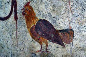 Ein kalabresisches Huhn