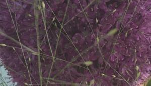 """Friday-Flowerday oder Eine Allium """"Fussvolk"""""""