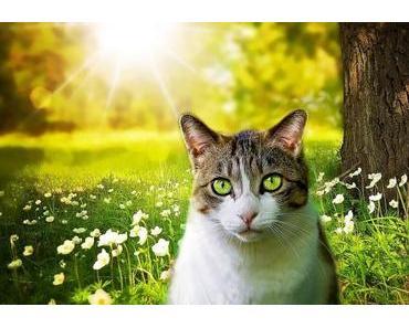 Zum ersten mal draußen – So kannst du deine Katze an Freigang gewöhnen