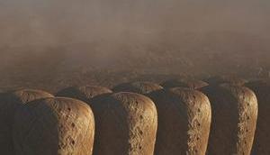 Kolonie Mars könnte lokal wachsendem Bambus gebaut werden