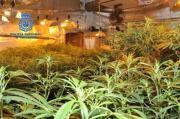Guardia Civil hebt Marihuana-Plantagen in Consell und Sineu aus