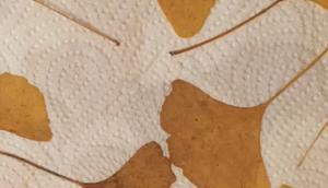 Ginkgo, schön Form Farbe oder DIY: Bild bemalten Ginkgo-Blättern