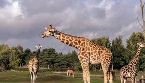 Jenseits Afrika niederen Landen Safaripark Beekse Bergen.