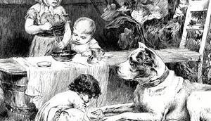 Hundeernährung leicht gemacht praktischen Beispielen