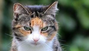 Katzenjahre Menschenjahre umrechnen deine Katze wirklich