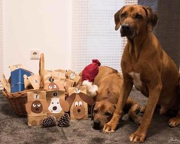 Selbstgebastelt – Adventskalender für Hunde