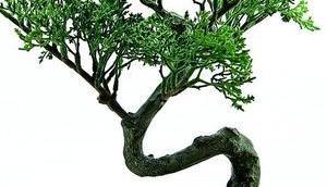 Hausbäume gestalten