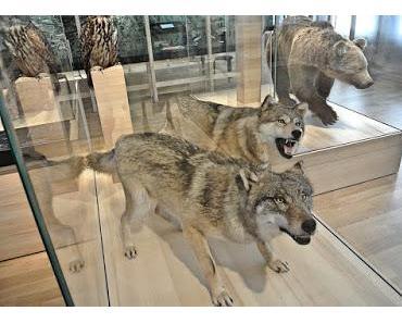 Die Wölfe von Olten