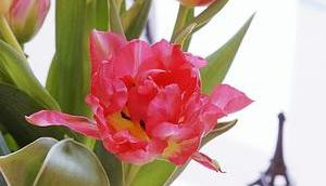 Friday-Flowerday 04/20