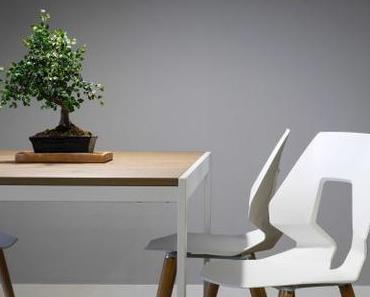Der Bonsai: ein Baum, der in einen Blumentopf passt