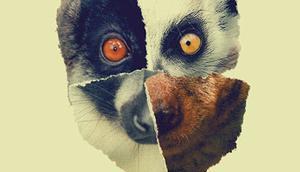 Künstlervorstellung: Lemur