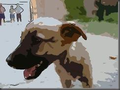 Gnadenfrist für streunende Hunde