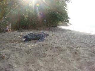 Die Schildkrötensaison hat begonnen